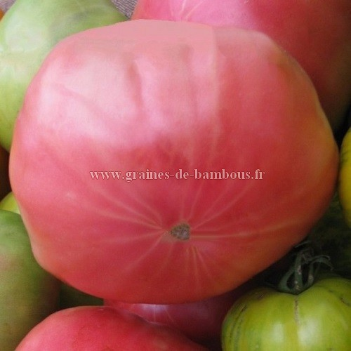Graines tomate johnson pink
