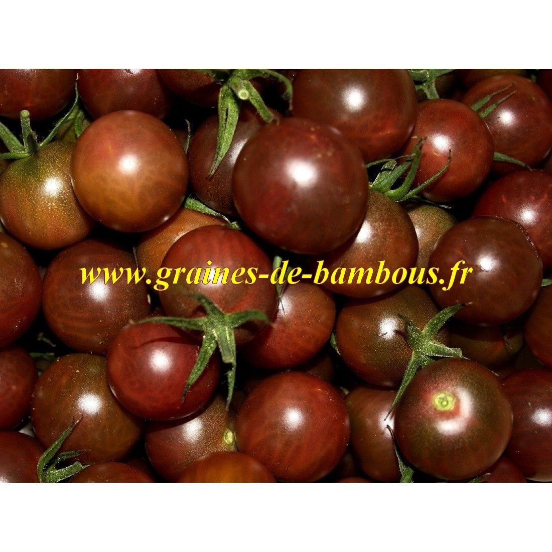 Graines tomate noire black cherry