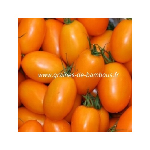 Graines tomate orange banana