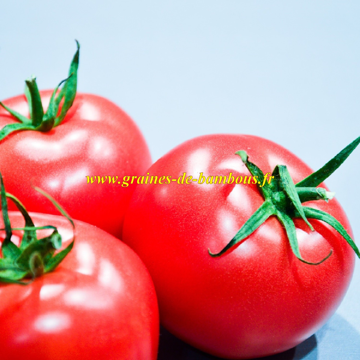 Graines tomate pomme rouge