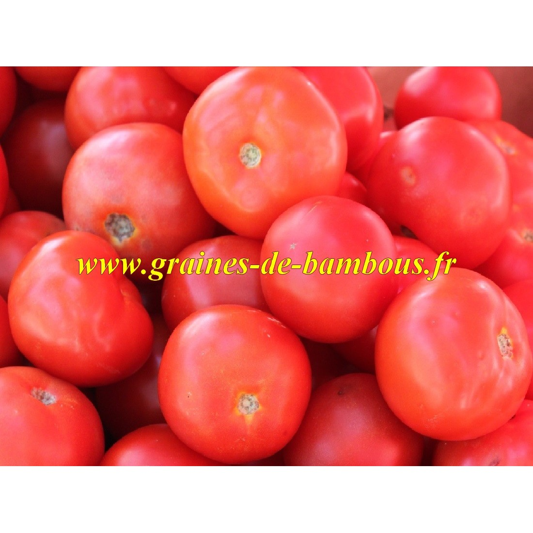 Graines tomate rose berne