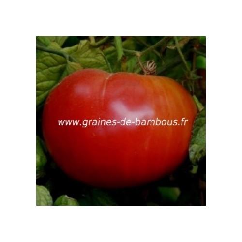 Graines tomate rouge ponderosa red graines de bambous fr