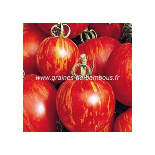 Graines tomate solanacees