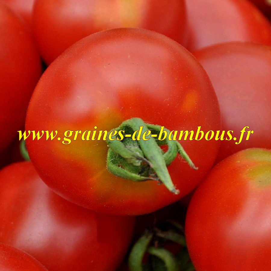Graines tomate stupice gros plan
