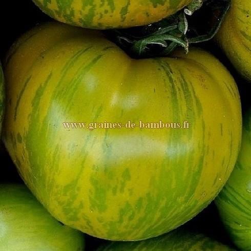 Green zebra semences de tomate