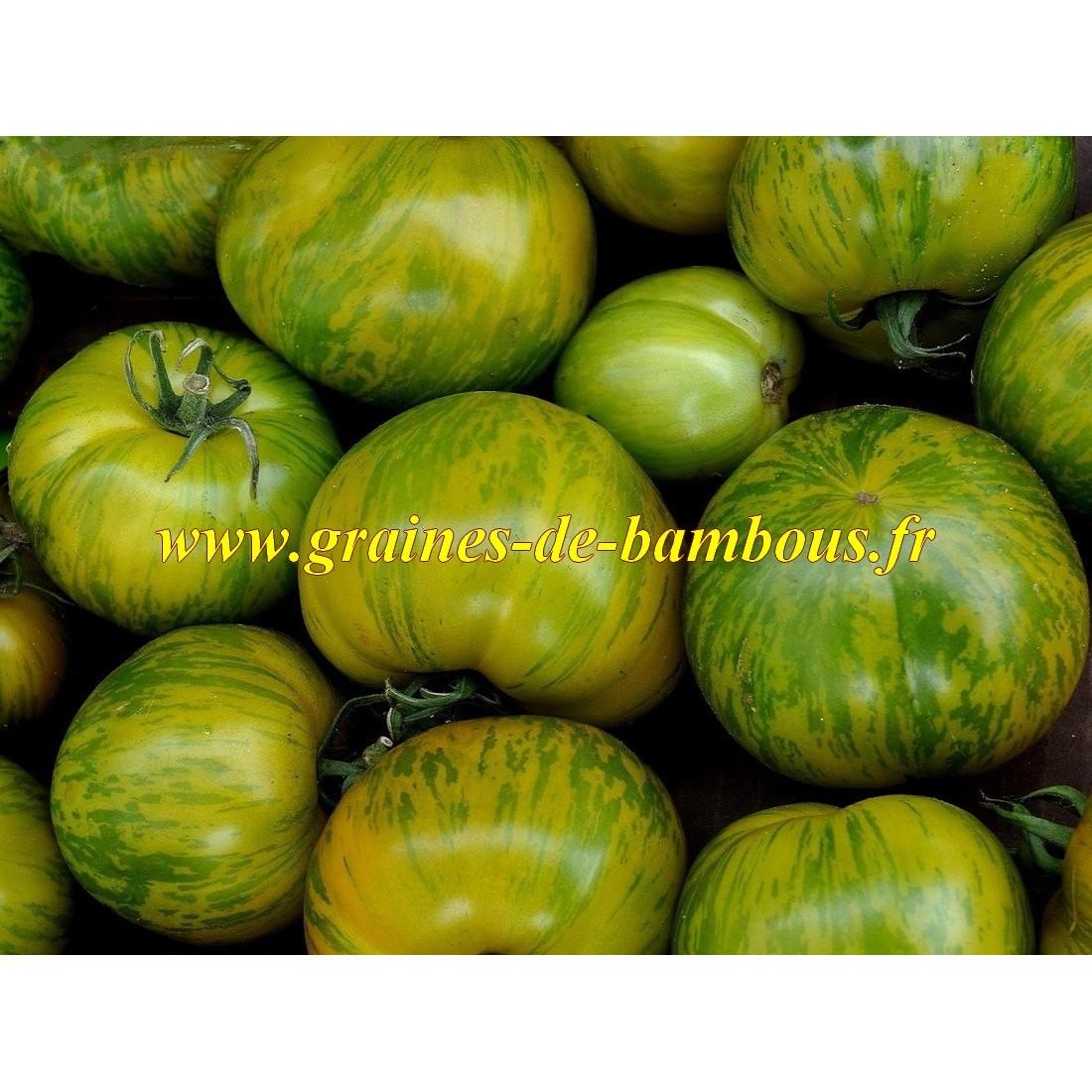 Green zebra tomate graines de bambous fr