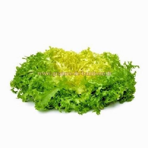 Grosse pancaliere scarole frisee graines legume et potagere