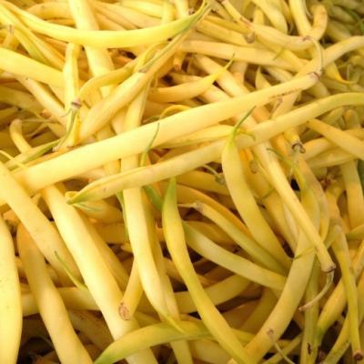 Haricot jaune roi des beurres réf.841