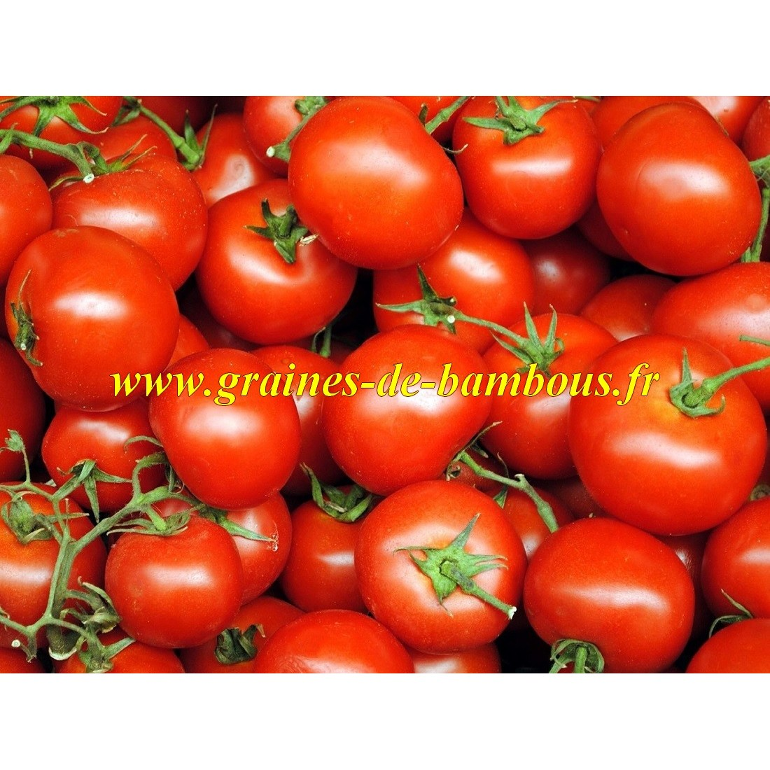 Heinz 1370 graines de tomate