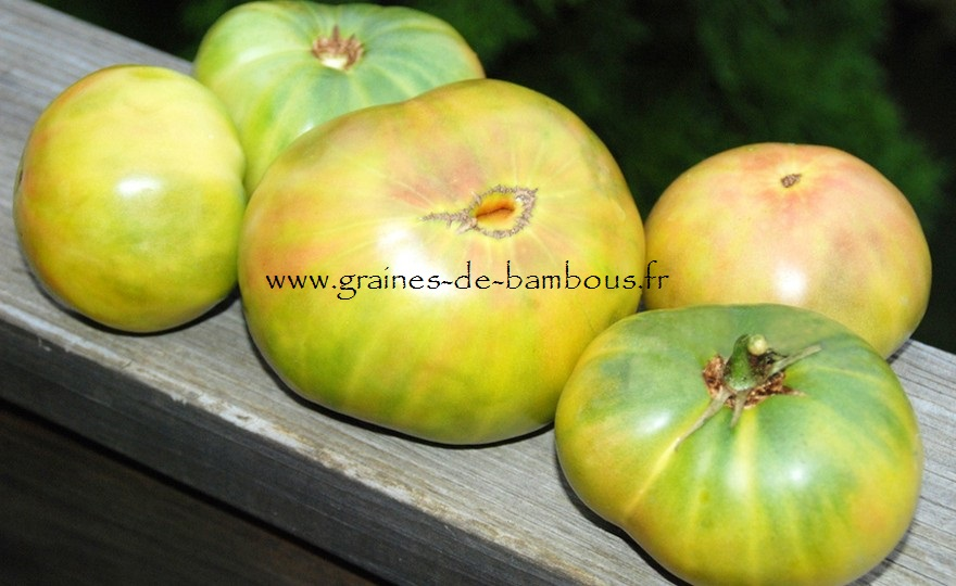 Hh tomato aunt rubys german green
