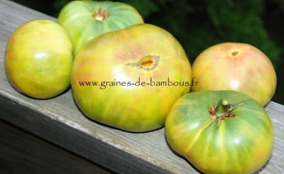 Tomate Aunt Ruby's German Green Réf.822