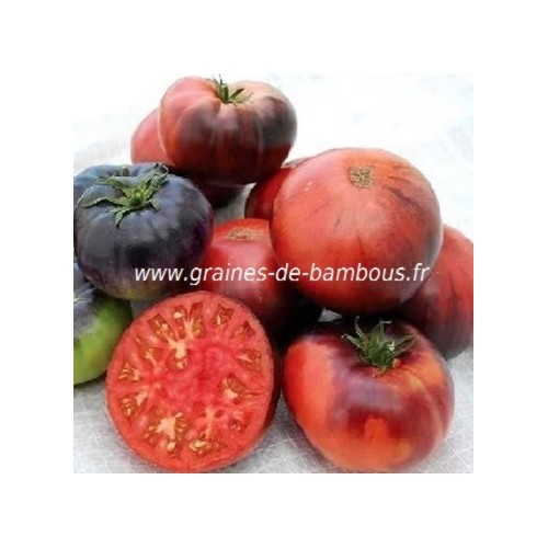 Indigo blue beauty graine de tomate bleue