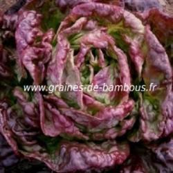 Laitue merveille des 4 saisons www graines de bambous fr