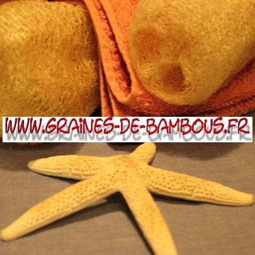 luffa-cylindrica-ou-aegyptiaca-1000-graines-www-graines-de-bambous-fr-2.jpg