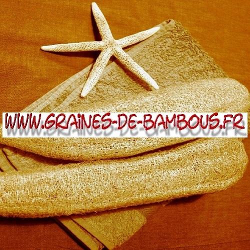 luffa-cylindrica-ou-aegyptiaca-1000-graines-www-graines-de-bambous-fr-3.jpg