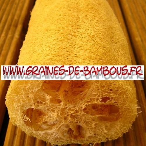 luffa-longue-cylindrica-aegyptiaca-1000-graines-www-graines-de-bambous-fr-2.jpg