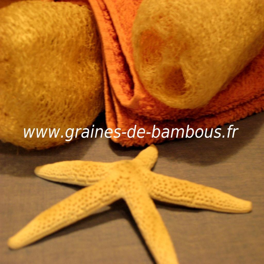 luffa-serviettes-www-graines-de-bambous-fr-5.jpg