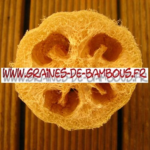 luffa-xt-longue-cylindrica-aegyptiaca-1000-graines-www-graines-de-bambous-fr-3.jpg