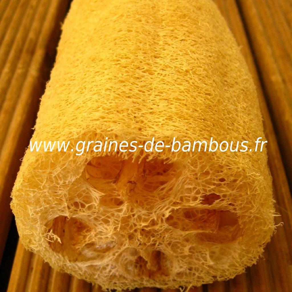 luffa-xt-longue-www-graines-de-bambous-fr-4.jpg