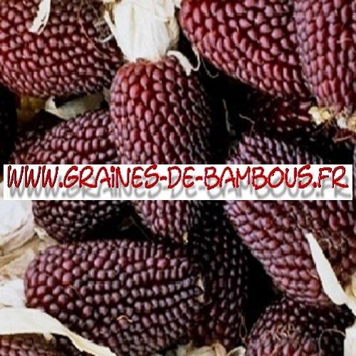 mais-fraise-popcorn-1000-graines-www-graines-de-bambous-fr.jpg