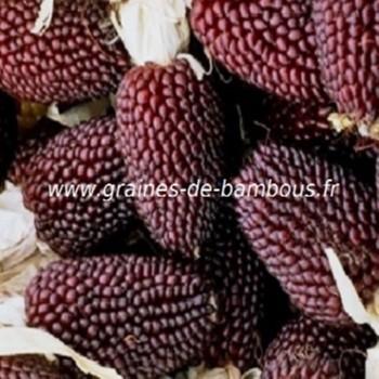 mais-fraise-popcorn-www-graines-de-bambous-fr-1.jpg