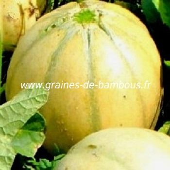melon-charentais-www-graines-de-bambous-fr-1.jpg
