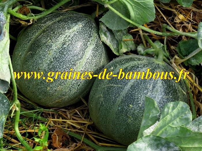 Melon petit gris de rennes graines