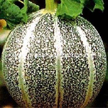 melon-petit-gris-de-rennes-www-graines-de-bambous-fr-1.jpg