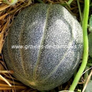Melon petit gris de Rennes réf.373