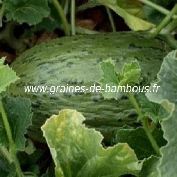 Melon Pinonet Piel de Sapo réf.377