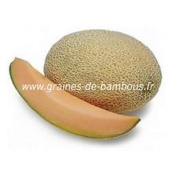Melon cavaillon espagnol a chair rose graines