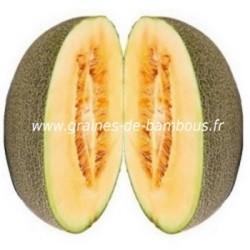Melon cavaillon espagnol chair rose graines de bambous fr