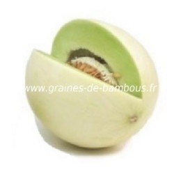 Melon honey dew graiines