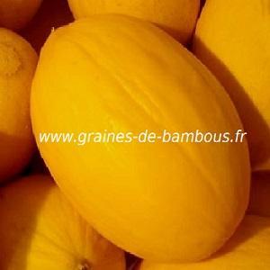 Melon jaune Canari réf.574