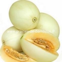Melon miel cucumis melo