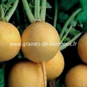 Navet jaune Boule d'or réf.575