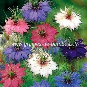 Nigelle de Damas Persian Jewels double variée réf.734