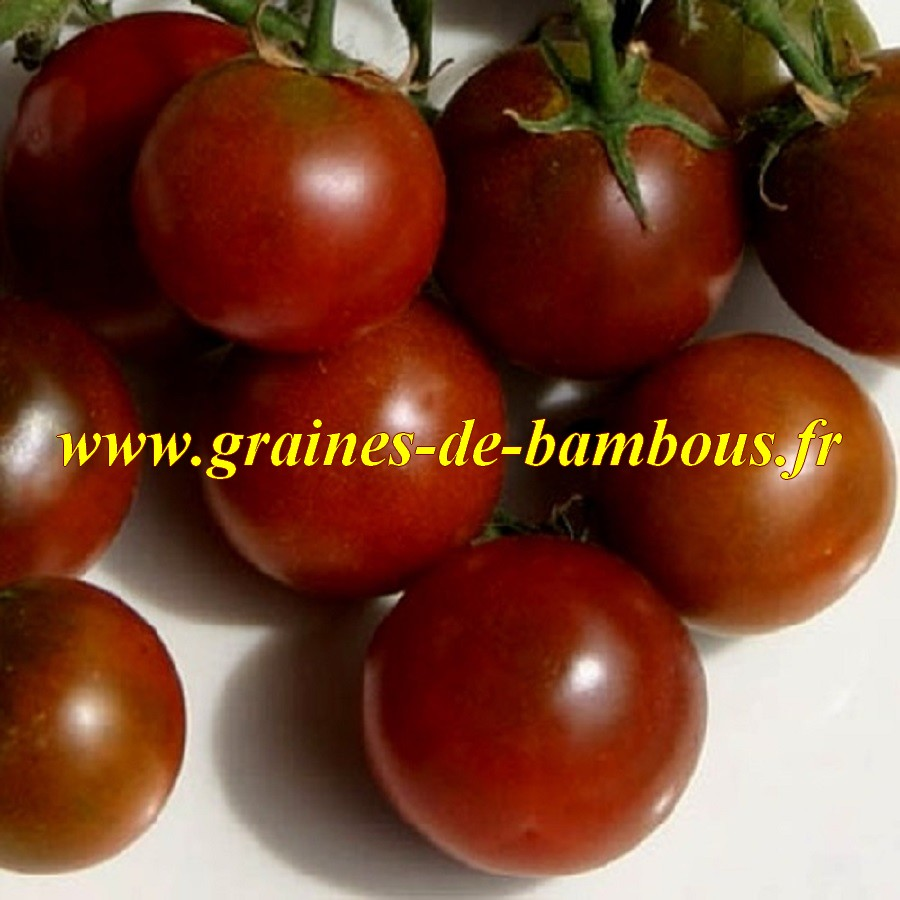 Nyagous graines de tomate non traitees