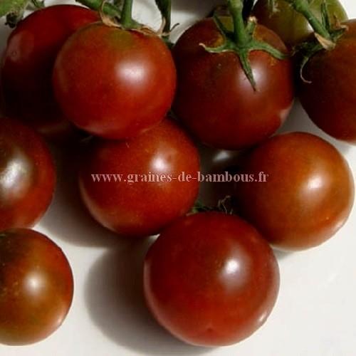 Nyagous graines de tomate