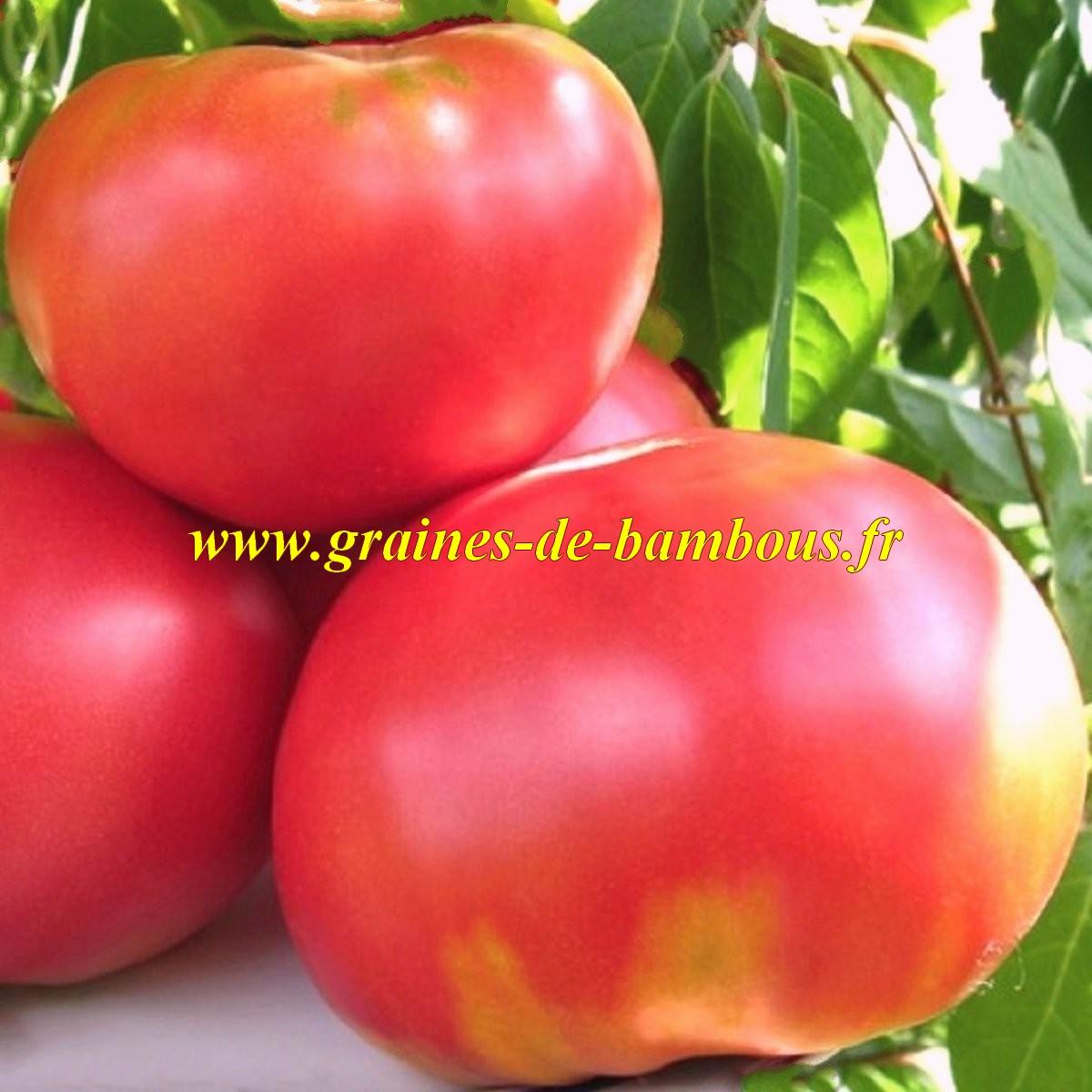 Olena ukrainian tomate graines semences
