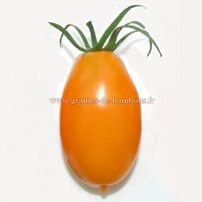 Tomate orange Banana réf.532