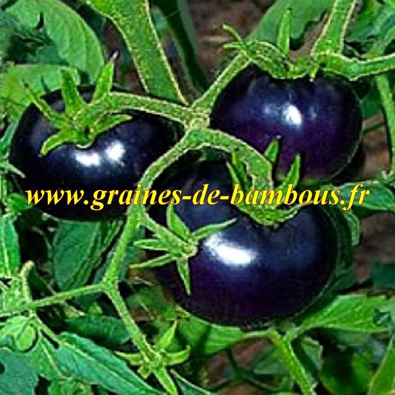Osu blue p 20 graines de tomate