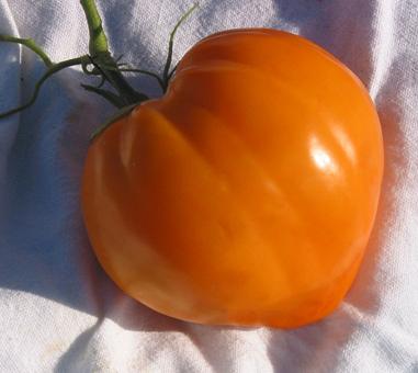 Tomate Coeur de Boeuf Orange réf.301