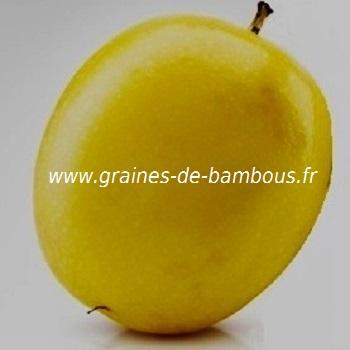 passiflore-edulis-f-flavicarpa-fruit-de-la-passion-www-graines-de-bambous-fr.jpg