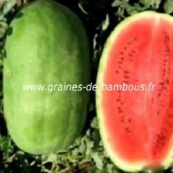 Pasteque charleston gray melon d eau