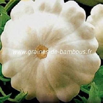 Pâtisson blanc Custard white réf.642
