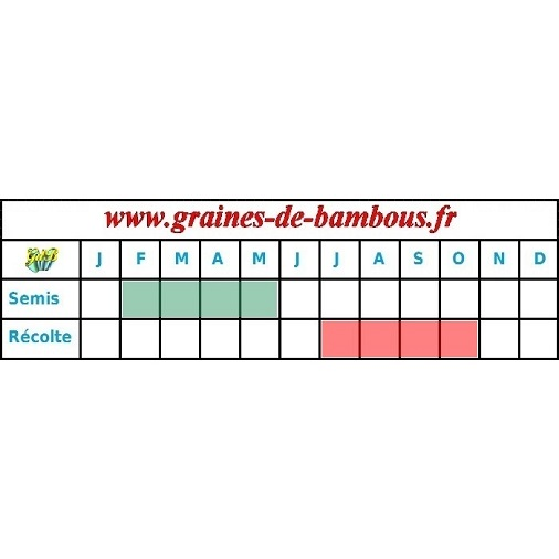 Periode semis tomate chair boeuf beefsteak