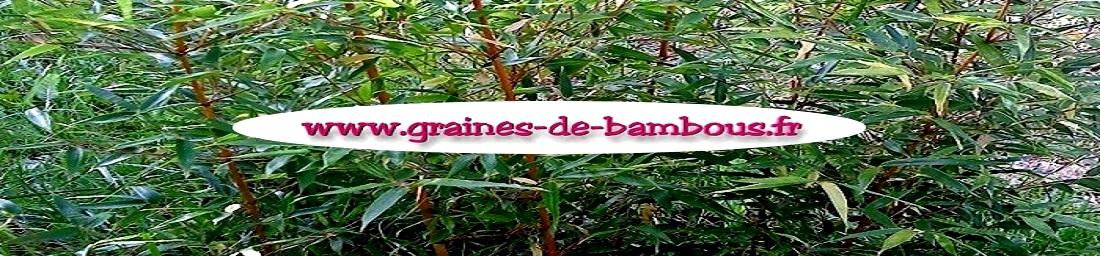 www.grainesdebambous.com / www.graines-de-bambous.eu