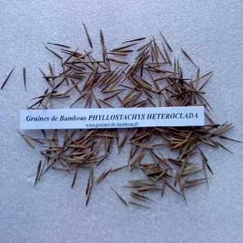 Phyllostachys heteroclada www graines de bambous fr 1