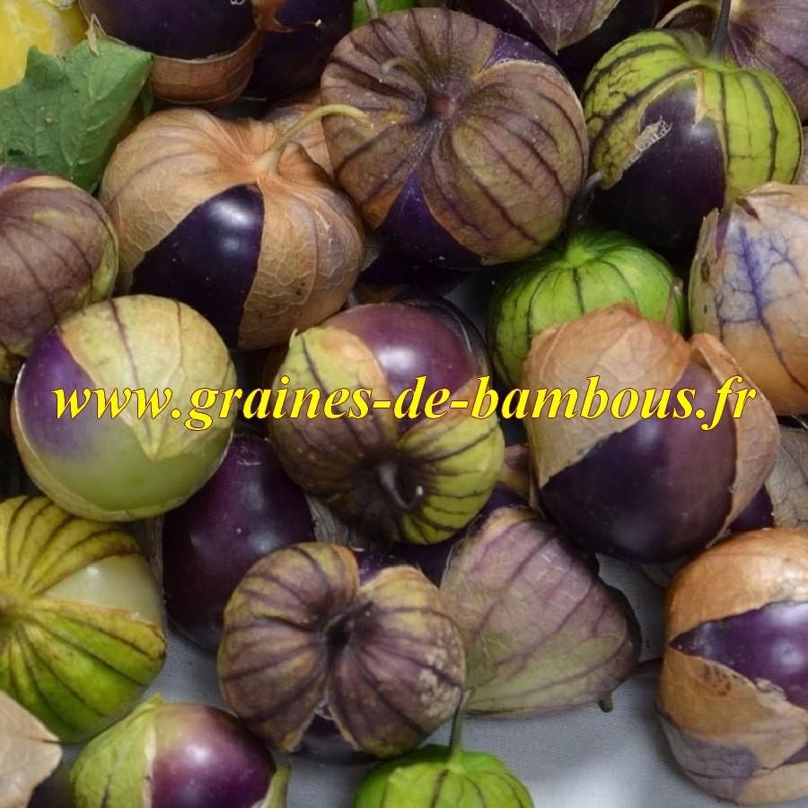 Physalis ixocarpa tomatillo pourpre graines